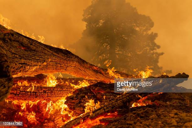 The Bobcat Fire burns downed trees in the Angeles National Forest on September 10, 2020 north of Monrovia, California. California wildfires that have...