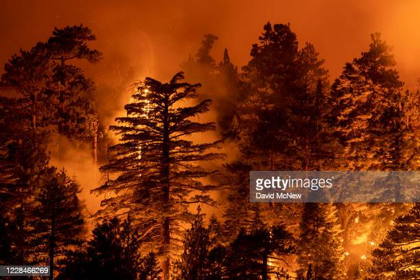 The Bobcat Fire burns through the Angeles National Forest on September 11, 2020 north of Monrovia, California. California wildfires that have already...