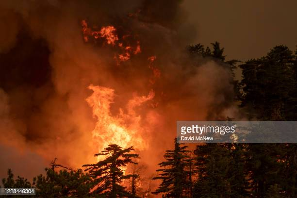 The Bobcat Fire consumes a forest in the Angeles National Forest on September 10, 2020 north of Monrovia, California. California wildfires that have...