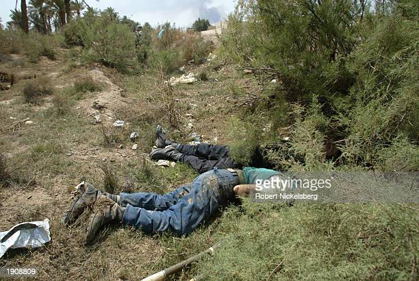 The bodies of Iraqi army POWs lie in the grass after they were taken and killed in an ambush April 3, 2003 as the Marines entered the western parts...