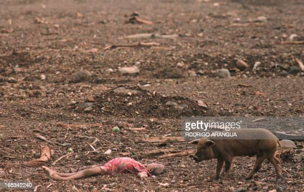 The body of a child lies in a mud field 02 November in the Posoltega area of Nicaragua 135kms northwest of Managua where a mudslide caused by heavy...