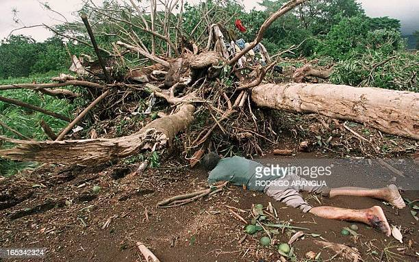 The body of a man lies face down 01 November in Posoltega 140 kms northwest of the Nicaraguan capital of Managua after tons of mud rocks and trees...