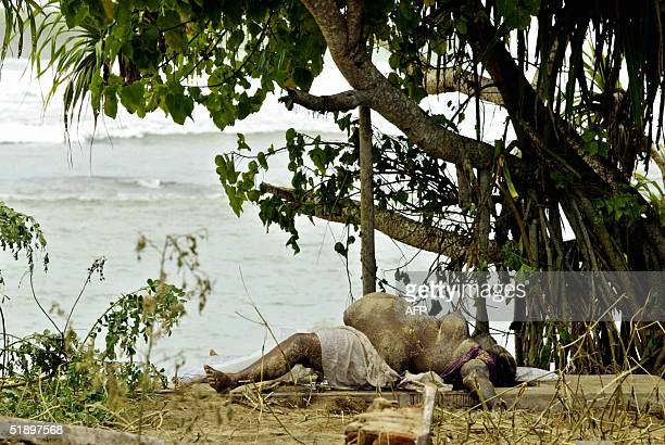 The body of a Sri Lankan victim lies near a beach in the southern coastal town of Matara 28 December 2004 after the region was hit by quaketriggered...