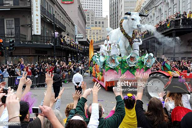 The Boeuf Gras a permanent float in the Rex parade that symbolizes feasting turns onto Canal Street on Mardi Gras March 8 2011 in News Orleans...