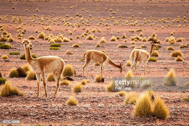 The Bolivian Atacama
