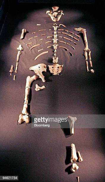 The bone fragments belonging to Lucy, the 3.2 million-year-old member of the Australopithecus afarensis species, are displayed in a case at the...