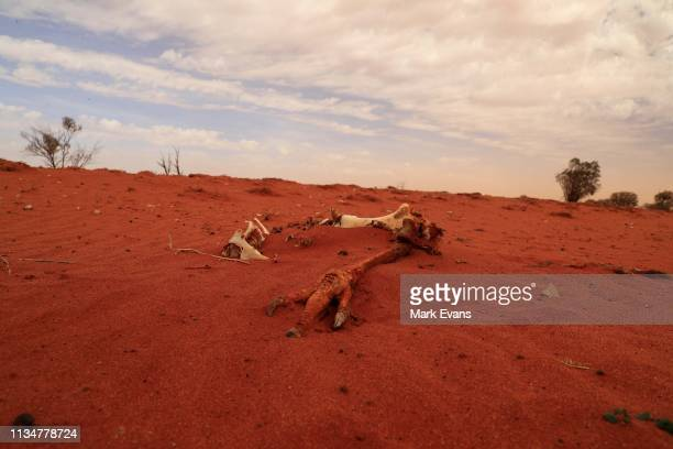 The bones of an Emu is seen on March 06, 2019 in Wilcannia, Australia. The Barkandji people - meaning the river people - live in Wilcannia, a small...