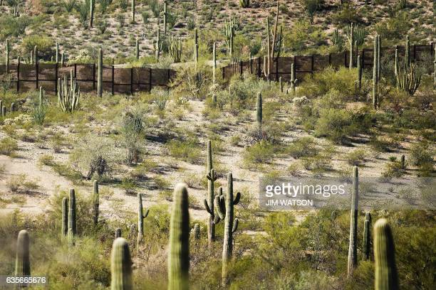 The border fence is surrounded by cacti at Organ Pipe Cactus National Monument near Lukeville Arizona on February 16 on the US/Mexico border This...