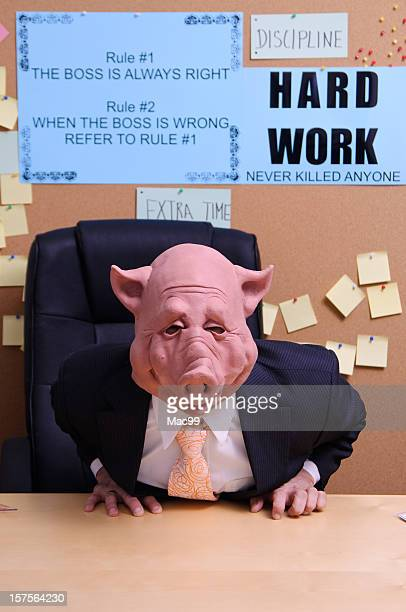 the boss is angry - ugly pig stock pictures, royalty-free photos & images