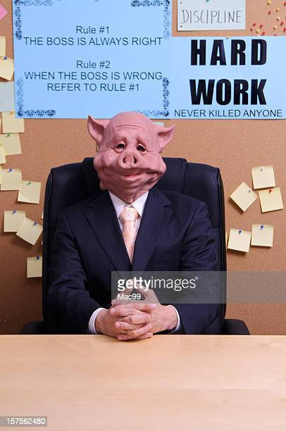 the boss - ugly pig stock pictures, royalty-free photos & images