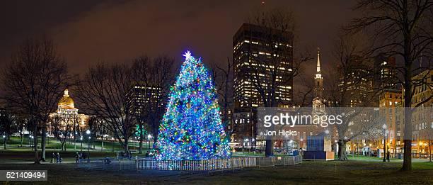 The Boston Christmas Tree on Boston Common, Boston, Massachusetts.