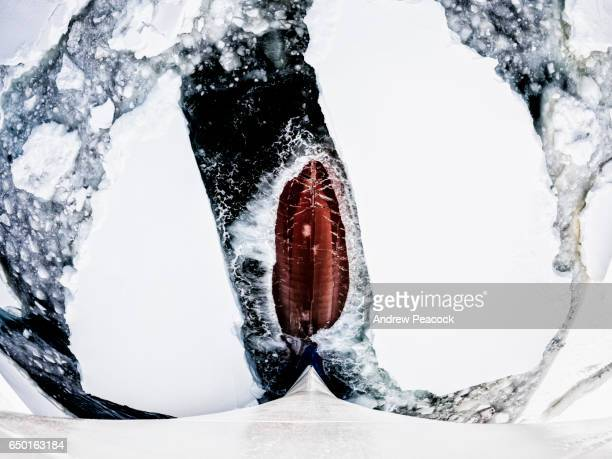 The bow of a ship breaks through ice