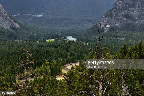 the bow river flows through a valley in banff national park - sulphur mountain stock pictures, royalty-free photos & images