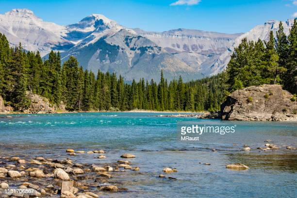 the bow river near banff - bow river stock pictures, royalty-free photos & images
