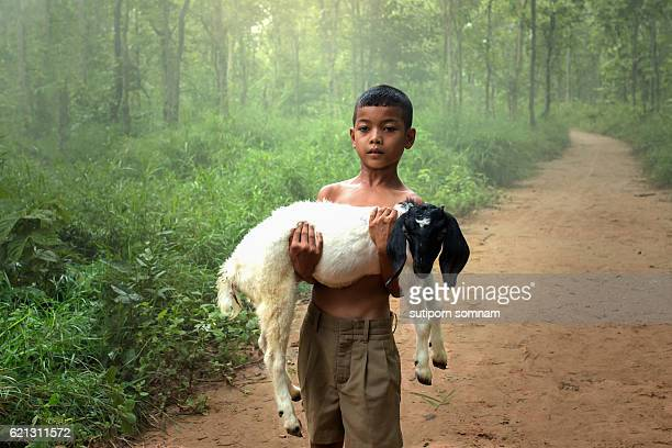 the boy and goat - bangladesh village stock photos and pictures