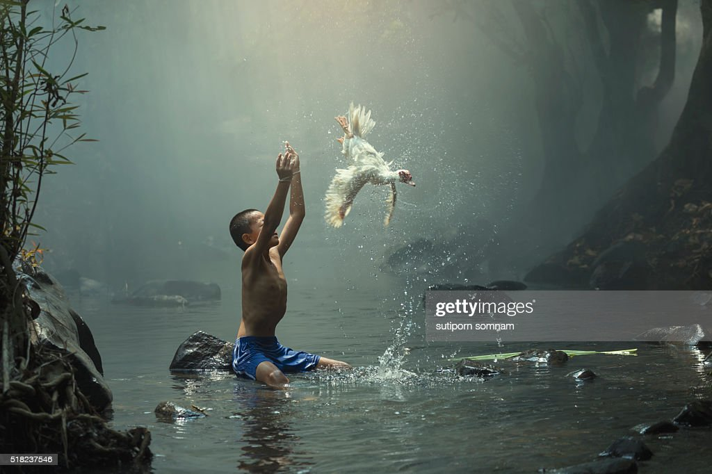 The boy cast white duck : Stock Photo