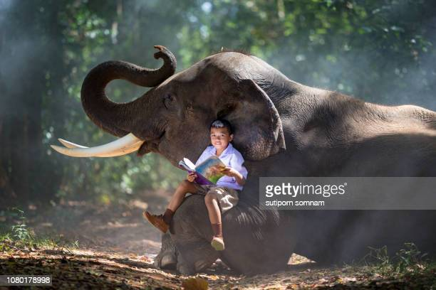 the boy is reading a book and sitting on elephant leg - elephant handler stock pictures, royalty-free photos & images