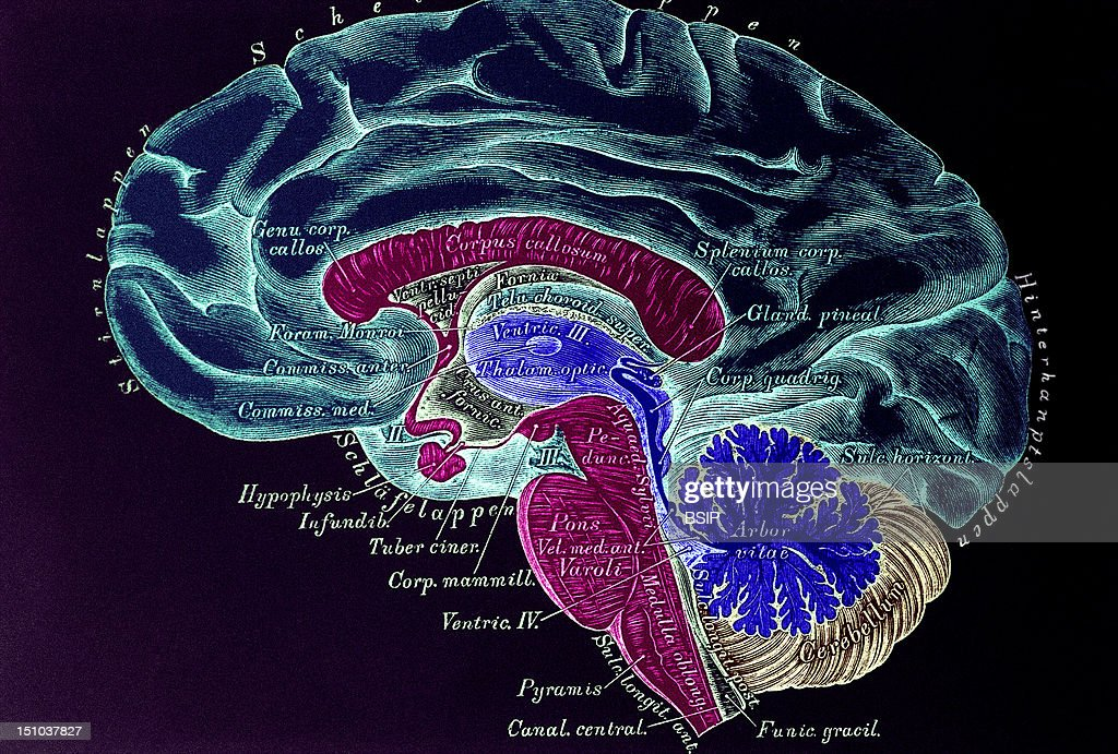 Brain Drawing Pictures Getty Images