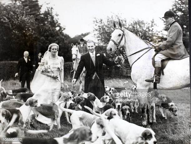 The bride and bridegroom Miss Nancy Cail of Elmfield Hall Scorton and Mr WM Staveley among the hounds after their wedding at BoltononSwale Yorkshire...