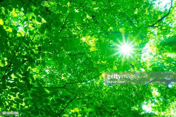 The brilliant sunshine filtering through foliage