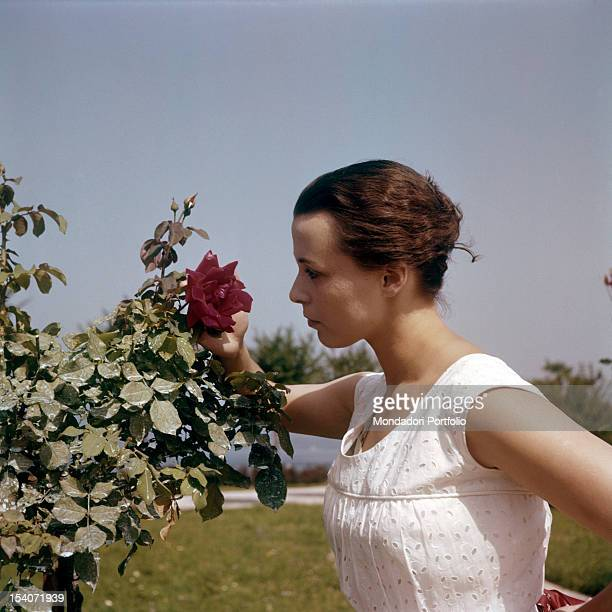 The British actress Claire Bloom observing a red rose Stresa 24th August 1956