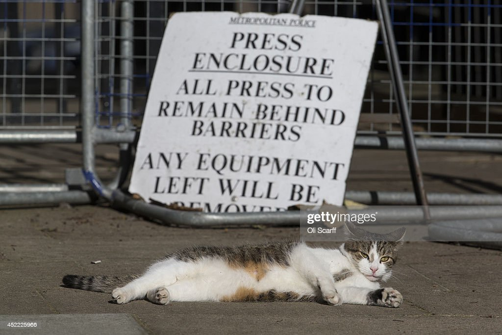 The British Prime Minister David Cameron's cat, Larry, relaxes in the sunshine in the press enclosure in Downing Street on July 16, 2014 in London, England. The Met Office has issued a heatwave alert as temperatures throughout England and Wales are predicted to reach their highest level of the year this weekend.