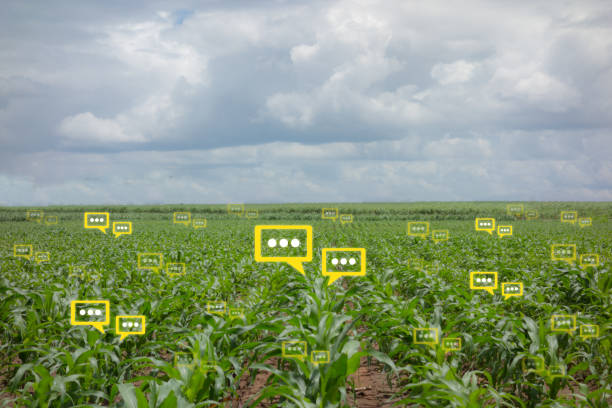 precision farming yields high profits in High profit lures farmers to high brinjal and capsicum has lured large number of farmers to switch over to high-tech precision agriculture or farming in the.