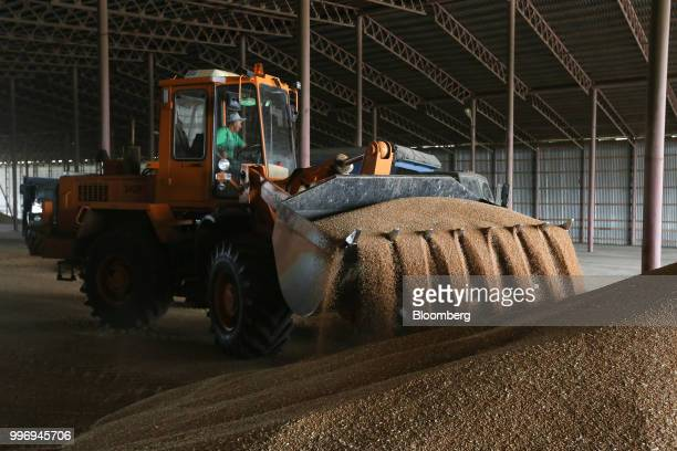 The bucket of a frontloader unloads wheat grain inside the storage facility during the summer wheat harvest on a farm operated by Ros Agro Plc in...
