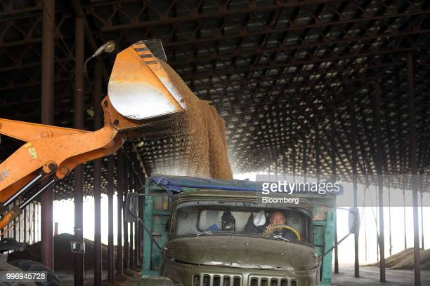 The bucket of a frontloader unloads wheat grain into a truck inside the storage facility during the summer wheat harvest on a farm operated by Ros...
