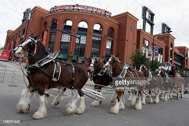 The Budweiser clydesdale horses walk by the outside of stadium prior to the St Louis Cardinals hosting the Milwaukee Brewers during Game Five of the...