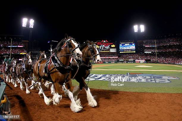The Budweiser clydesdale horses walk on the field prior to Game Five of the 2013 World Series between the St Louis Cardinals and the Boston Red Sox...