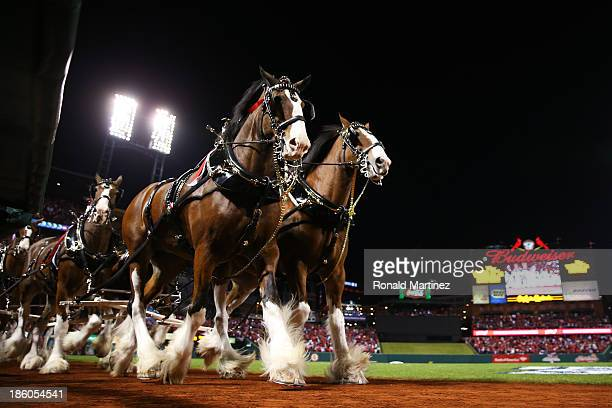 The Budweiser clydesdale horses walk on the field prior to Game Four of the 2013 World Series between the Boston Red Sox and the St. Louis Cardinals...