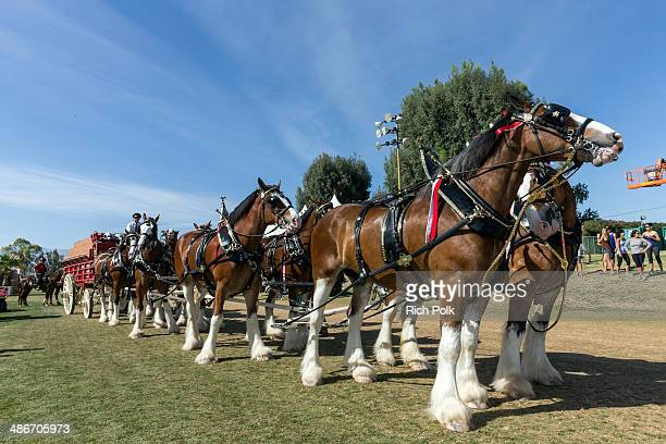 The Budweiser Clydesdale red wagon is seen during day 1 of 2014 Stagecoach California's Country Music Festival at the Empire Polo Club on April 25...