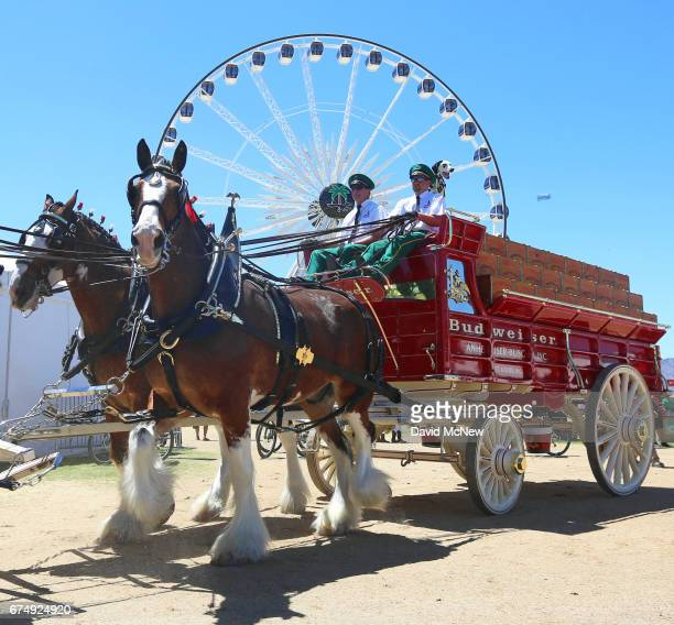 The Budweiser Clydesdales are seen during day 2 of 2017 Stagecoach California's Country Music Festival at the Empire Polo Club on April 29 2017 in...