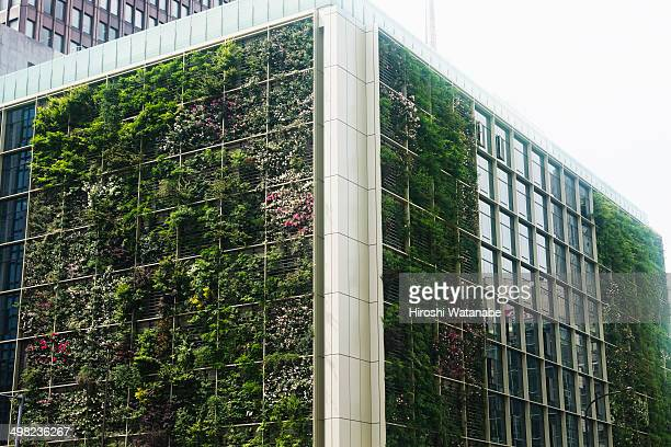 The building with the green wall