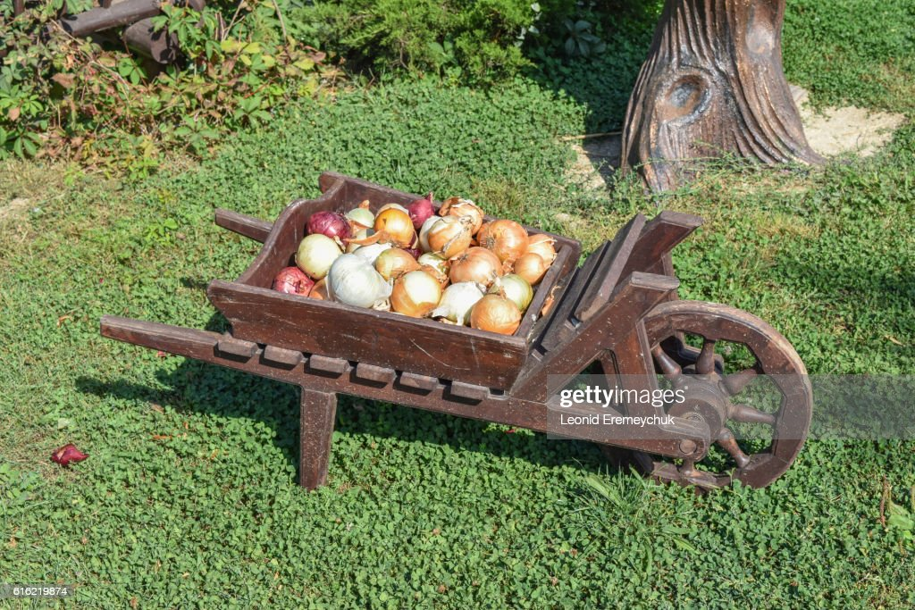 The bulbs of onions in the cart : Stockfoto
