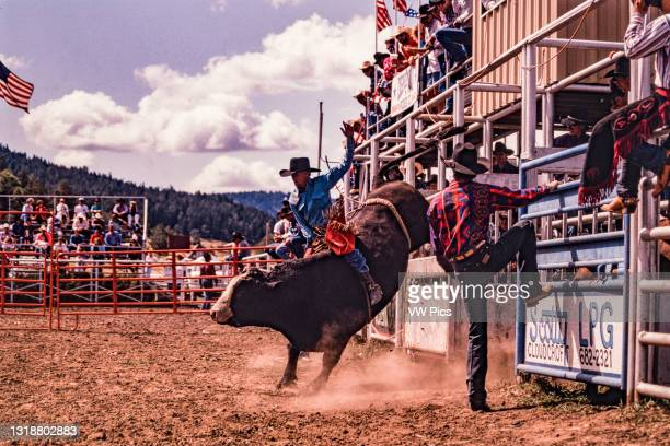 The bull breaks out of the chute bucking in the bull-riding competition at a small-town rodeo in New Mexico..