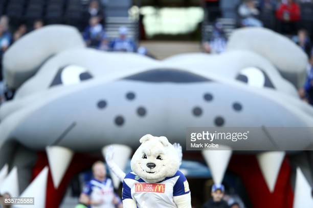The Bulldogs mascot runs out during the round 24 NRL match between the Canterbury Bulldogs and the Manly Sea Eagles at ANZ Stadium on August 20 2017...