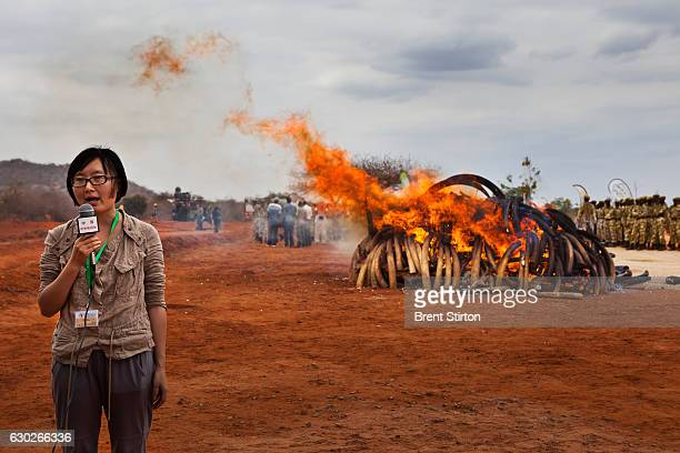 The burning of 5 tons of trafficked Ivory recovered from a seizure in Singapore in 2002 Manyani Tsavo Kenya July 20 2011 The ivory burnt here was...