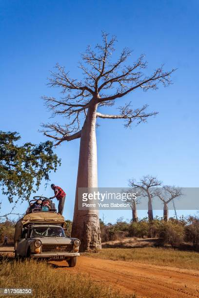 the bush taxi - pierre yves babelon stock pictures, royalty-free photos & images