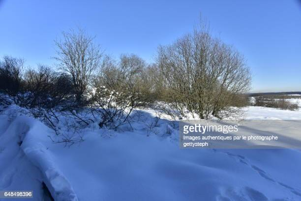 The bushes in thick layer of snow in shadow or under sunlight