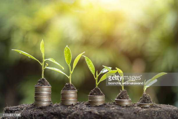the business coin and growth - prosperity stock pictures, royalty-free photos & images