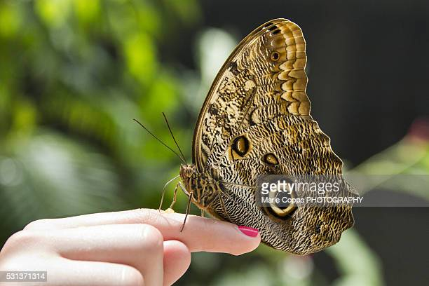 The Butterfly Farm, Saint Martin