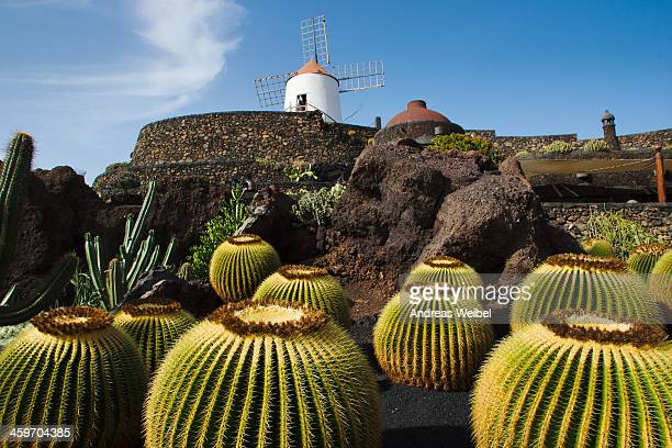 CONTENT] The Cactus Garden last masterpiece of Cesar Manrique is home to over 1500 varieties of cacti euphorbs aloes and agaves A recommended visit...