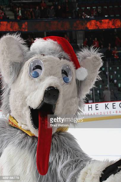 The Calgary Flames mascot Harvey the Hound celebrates the win against the St Louis Blues at Scotiabank Saddledome on December 23 2013 in...