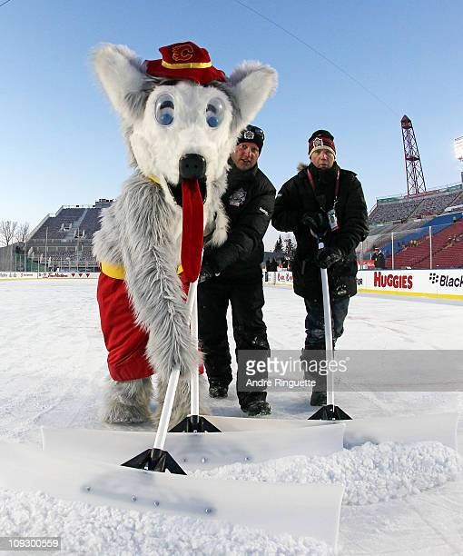 The Calgary Flames mascot Harvey the Hound helps the ice crew clean the ice during the Calgary vs Montreal Alumni game held as part of the 2011 NHL...