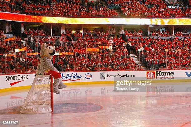 The Calgary Flames mascot Harvey the Hound riles up the 'C of Red' prior to the puck drop for game six against the San Jose Sharks during the 2008...