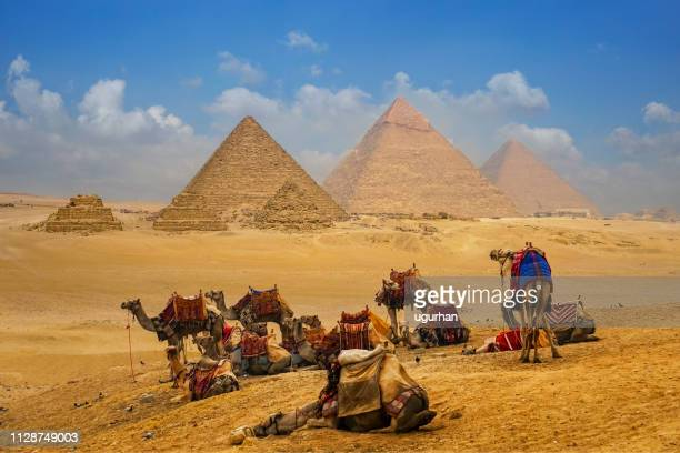 the camel caravan is in front of the egyptian pyramids. - pyramid stock pictures, royalty-free photos & images