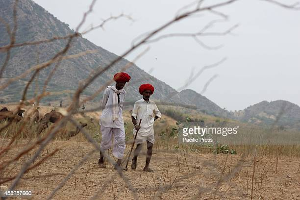 The camel traders at Pushkar Rajsthan Tourists are most interested to visit the Pushkar to explore the rugged terrain of the Great Indian Desert of...