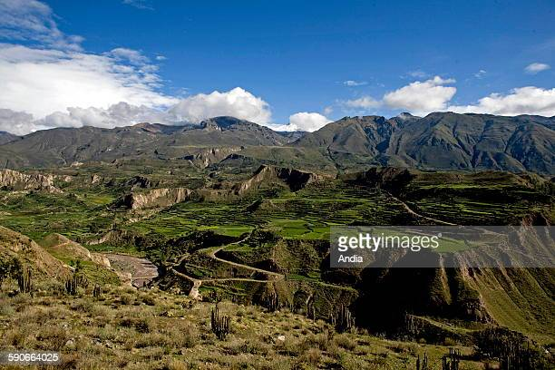 The Canyon of Colca in the Arequipa Region in Peru landscape of preInca terrace cultivations